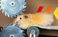 Hamsterlar İçin Tasarlanmış Eğlenceli Tuzaklar