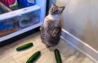 Sevimli Hayvanlardan Gününüzü Şenlendirecek Komik Anlar