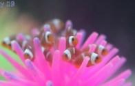 Dünyada Bulunan En Güzel Süs Balıkları