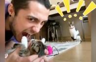 Yavru Kedi ve Lavaboda Eğlenceli Banyo Anları