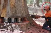 İnce Hesaplara Ayak Uyduran Ağaç Kesme Makineleri!
