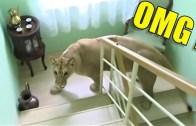 İnsanların Yaşam Alanına Saldıran En Vahşi Hayvanlar