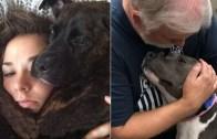 Alman Çoban Köpeği İle Sevimli Bebeklerin İletişimi