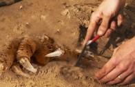 İnsanı Resmen Hayrete Düşüren Arkeolojik Keşifler!