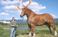 Yanlış Çiftleşmenin Eseri Olan Garip Melez Hayvanlar