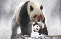 Hayvanlar Aleminin En Kötüleri – Umursamaz Anneler
