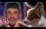 Evcil Hayvanlar ile Yapılan Yetenek Şovları Karşınızda
