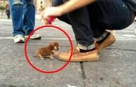 Tatlılıklarıyla Dikkatleri Çeken En Küçük Köpekler