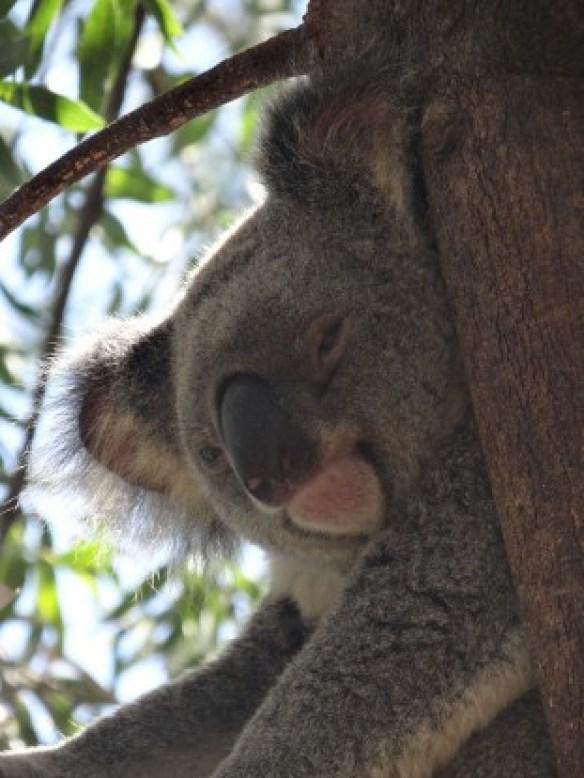 Australie- Rockampton: Jardin Botanique