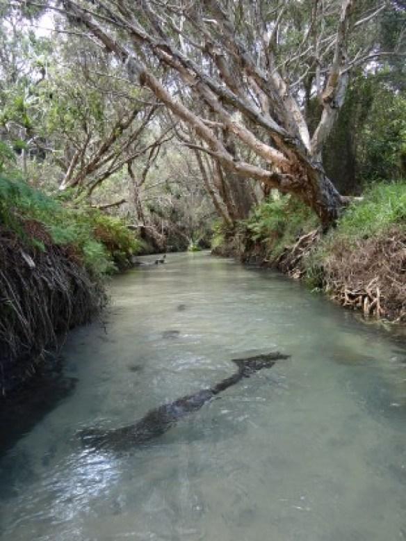 Australie- Frazer Island; C'est magnifique!