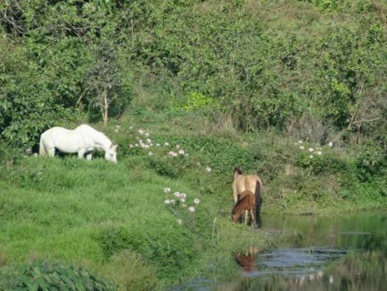 Nouvelle-Caledonie: La nature a l'etat brute