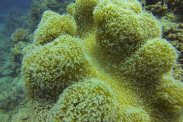 corail-matanzas-cuba-travel-voyage
