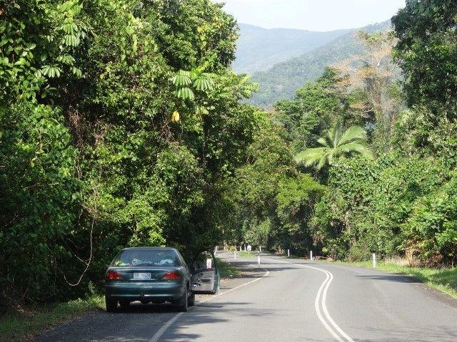 Australie- Queensland: Cap Tribulation: Le paysage.