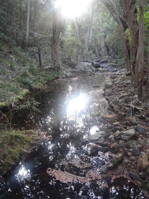 Australie- Queensland: La foret humide.