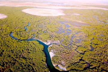 Photo des magnifiques bolongs de Mar Lodj dans le Sine-Saloum https://yoytourdumonde.fr