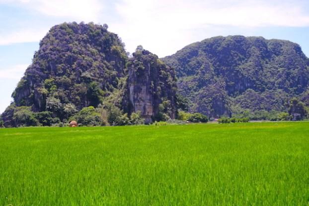 Magnifiques rizières sur la Baie d'Halong Terrestre photo blog tour du monde https://yoytourdumonde.fr