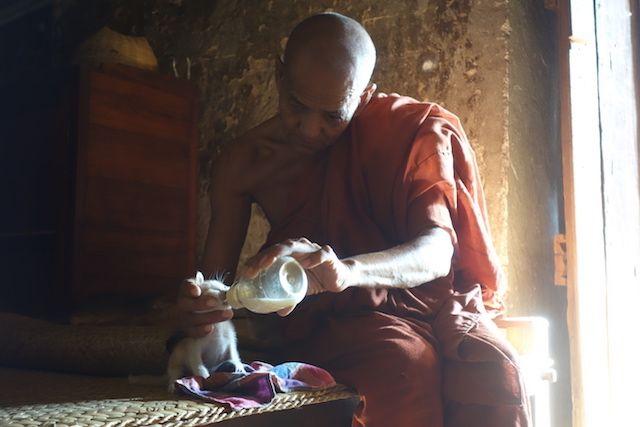 Dans le cité archeolofique de Bagan vous pouvez decouvrir la vie des habitants et des moines bouddhistes comme ce moine qui donnait du lait à des bébés chats qui avaient perdu leurs maman photo blog voyage tour du monde https://yoytourdumonde.fr