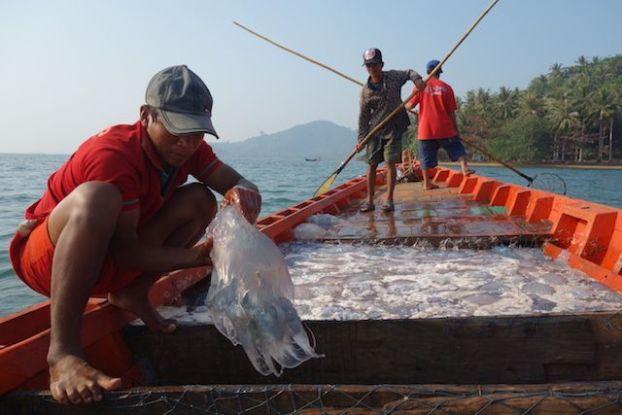 Cambodge - Kep: Alors au cambodge les pecheurs touchent les meduses sans aucune protection. Photo blog https://yoytourdumonde.fr