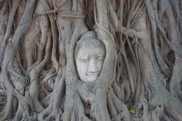 thailande-ayutthaya-unesco-travelling-voyage-tete-bouddha