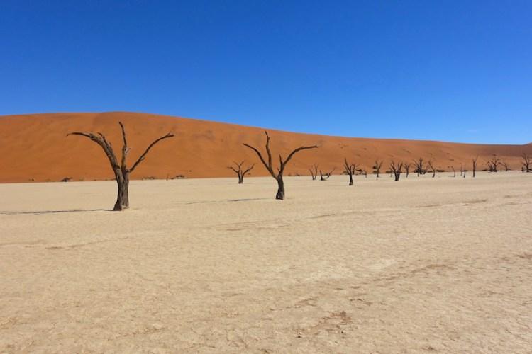 Les célèbres arbres pétrifiés dans le désert de Namib-Naukluft photo blog voyage tour du monde travel https://yoytourdumonde.fr