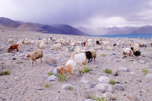 Paysage du Ladakh photo blog voyage tour du monde https://yoytourdumonde.fr