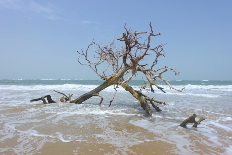 Une plage proche de Diembering en Casamance photo blog voyage tour du monde https://yoytourdumonde.fr