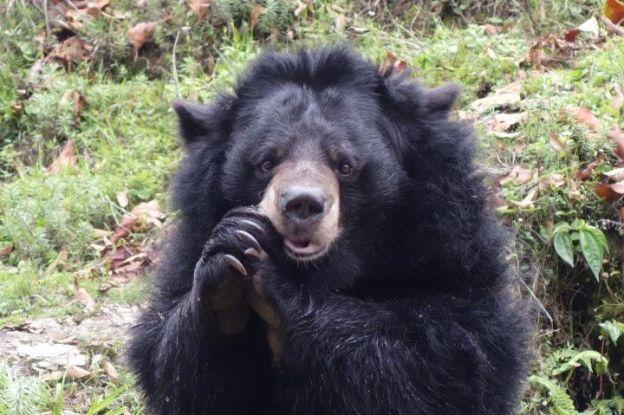 Un ours que vous pouvez rentrer dans l'himalaya ou dans le zoo de Darjeeling en Inde. Photo voyage tour du monde https://yoytourdumonde.fr