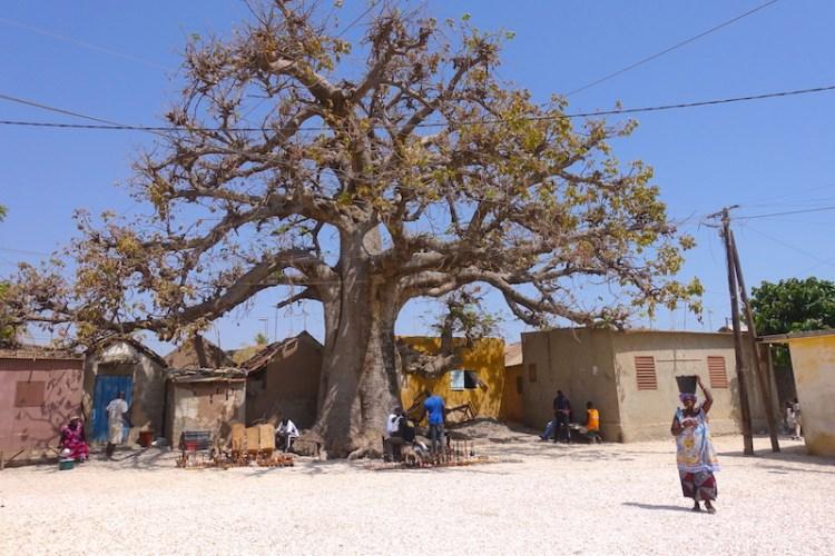 Entre coquillages et baobabs l'ile aux coquillages à tout pour séduire. Photo blog voyage tour du monde https://yoytourdumonde.fr