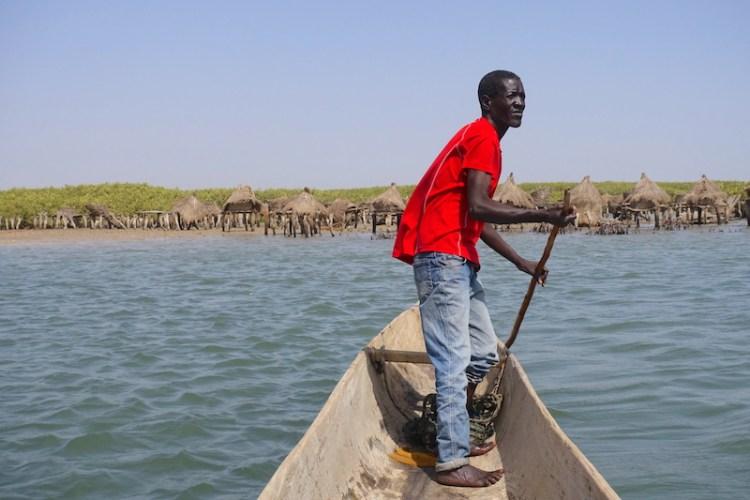 Les mangroves près de l'ile aux coquillages se visitent au Sénagal photo blog voyage tour du monde https://yoytourdumonde.fr