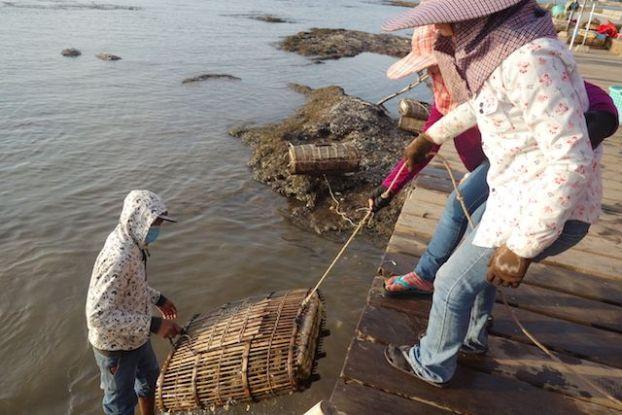 Le crabe bleu est à decouvrir à kep. Les locaux vont chercher les casiers. Article complet sur https://yoytourdumonde.fr