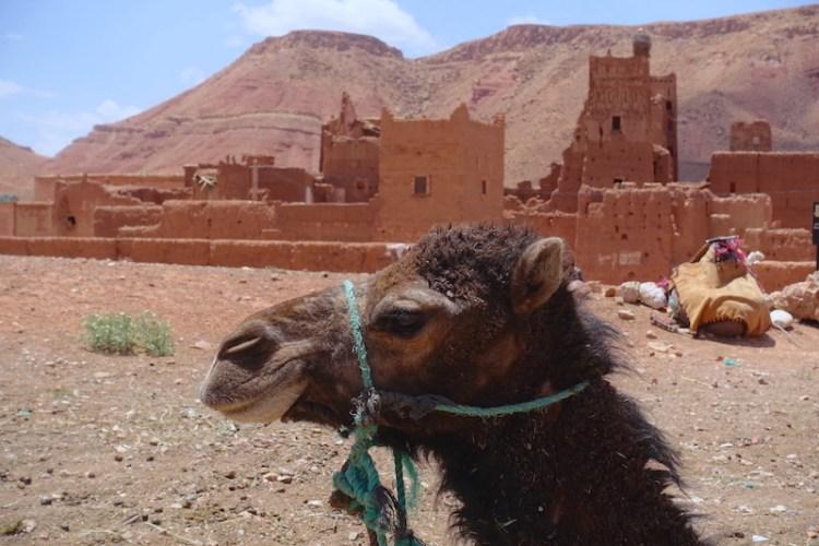 Tamedakhte maroc dromadaire ville du désert photo blog voyage tour du monde