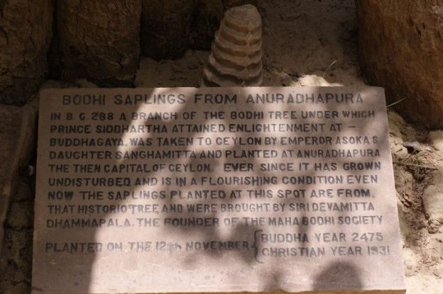 arbre-bouddha-eveil-inde