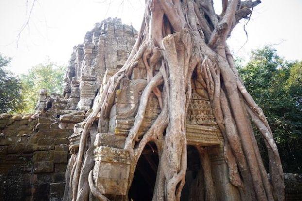 Les racines des arbres qui enlacent sur les temples d'Angkor à l'image de Ta Prohm