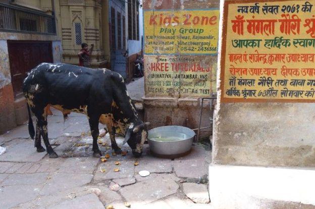 Ville sainte, Gange saint, et bien sur vache sainte. Viva India! Photo blog voyage tour du monde https://yoytourdumonde.fr