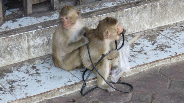 lopburi-thailande-singe