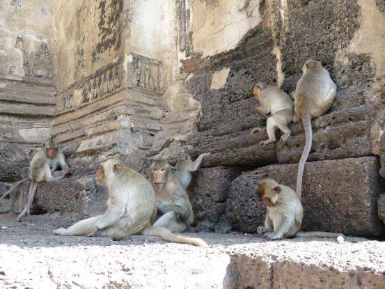Lopburi-thailande-temple-singe
