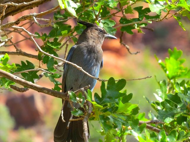 Vous allez pouvoir voir beaucoup d'animaux et d'oiseaux dans le Grand Canyon, photo blog voyage tour du monde https://yoytourdumonde.fr