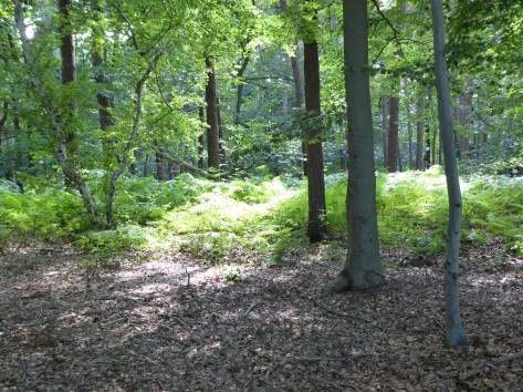 Gasthuisbossen Zillebeke - forest in Zillebeke 'Gasthuis' - le foret 'Gasthuis' à Zillebeke ©YRH2016