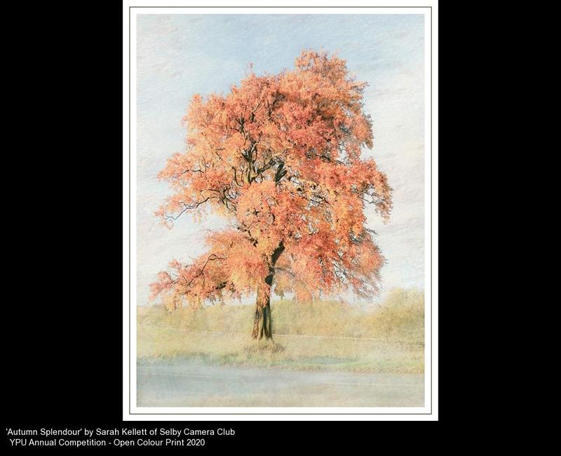 Selby Camera Club_Sarah Kellett_Autumn Splendour