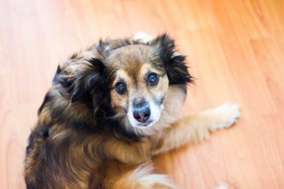 Dogs pets travel Santa Barbara animals