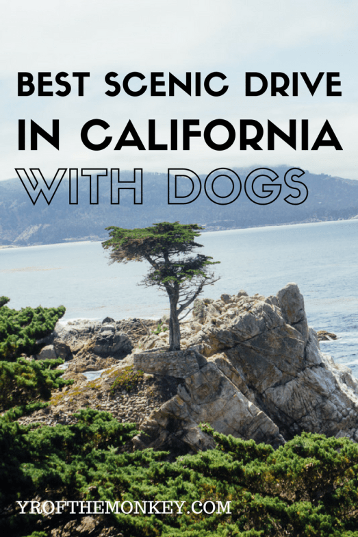 17 mile scenic drive California, Monterey Carmel travel with dogs dog friendly