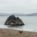 Black sand beach Sausalito Marin California Bay Area dogs pets hiking trail pacific ocean Golden gate bridge travel explore