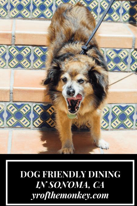 Dog Friendly restaurant Sonoma California lunch dining