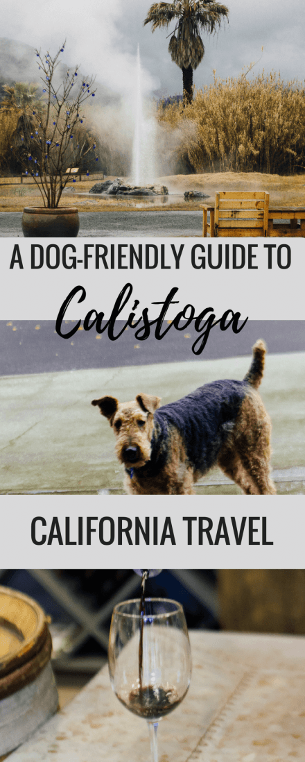 This is a dog-friendly guide to Calistoga (USA), California's hidden gem. This small town in wine country, Napa valley, is filled with lots of dog friendly activities, old faithful geyser and wineries that welcome dogs. This guide is for how to spend 24 hours in Calistoga, California, USA with your dog or pet.