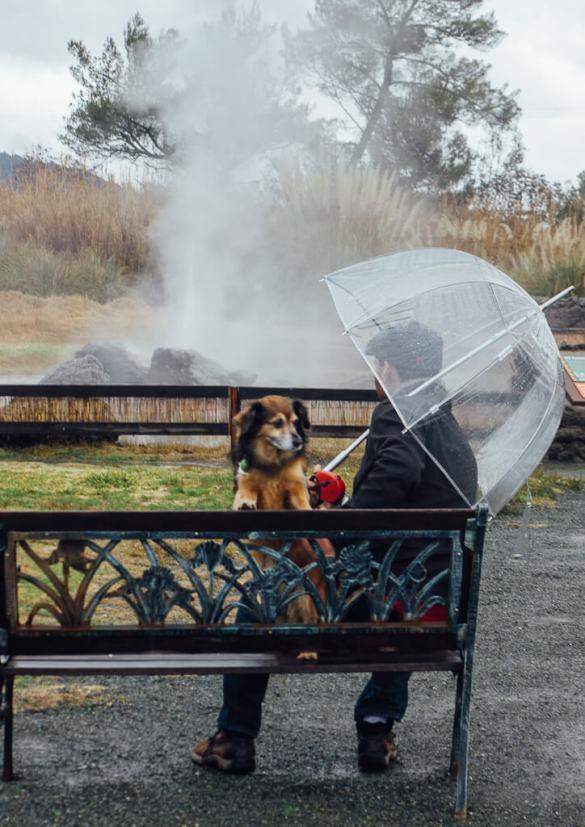Old faithful Geyser Geology Calistoga Napa wine dogs pets family father vacation travel spa geologic