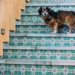 Sausalito Marin California Bay area staycation house boat Marina pets dogs travel family Airbnb