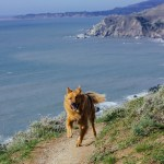 weekend getaway Muirbeach Muir beach dogs pets travel hiking Pacific ocean bay area California vacation
