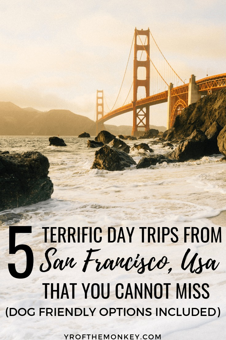 Looking for Bay Area day trips from San Francisco? Look no further than this San Franciscan's guide to 5 epic Bay Area road trip ideas which are easy and amazing day trips. Most are dog friendly as well. Pin this to your California or pet friendly travel board now! Photo copyright free from Unsplash. #USA #bayareadaytrips #roadtrips #california #sanfrancisco #bayarea #californiavacation #dogfriendly #travelwithdogs #petfriendlytravel #californiaroadtrips #daytripsfromsanfrancisco