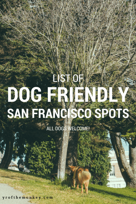 Dog Friendly San Francisco spots parks beaches