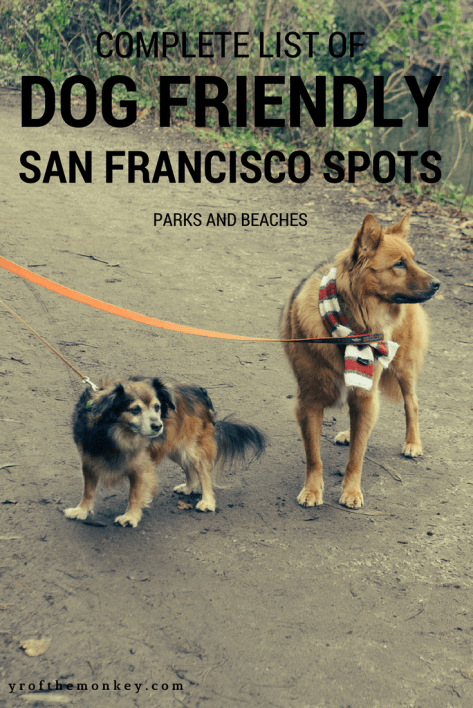 Dog Friendly San Francisco spots